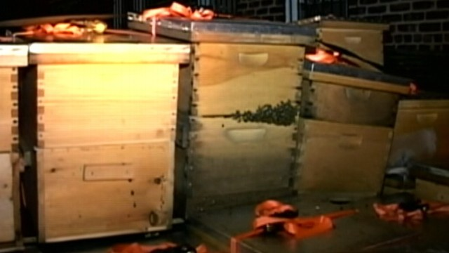 VIDEO: Authorities confiscate insects from homeowner in Queens who started with one hive two years ago.