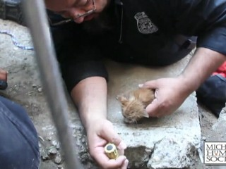 Watch: Kitten Rescued From Drain Pipe