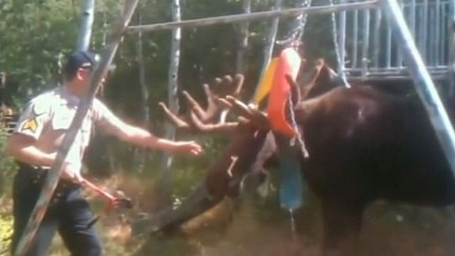 Moose swingset commercial