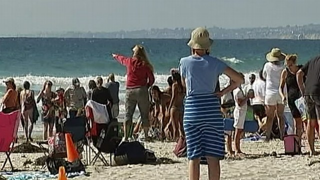 VIDEO: Lifeguard spotted possible great white shark about 50 yards off La Jolla Shores.