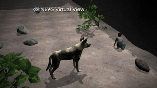 VIDEO: Maddox Derkosh, 2, was mauled by a pack of African painted dogs in November 2012.