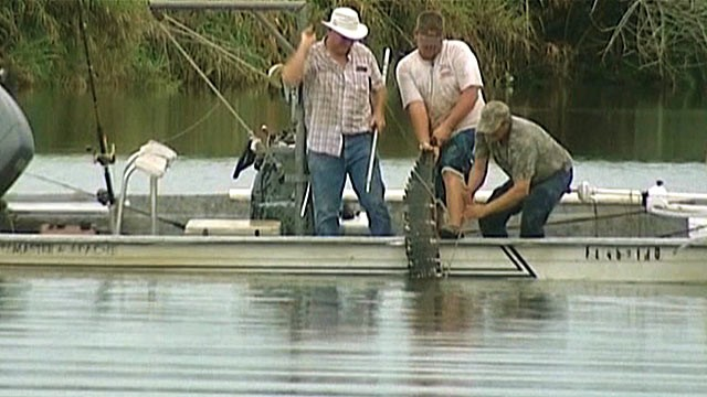 Foot Alligator That Attacked Swimmer Pulled From The