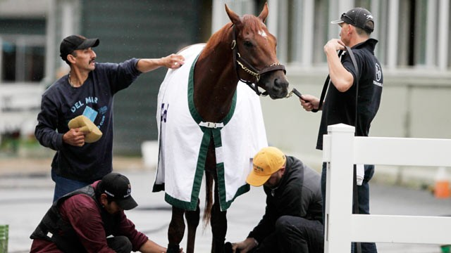 PHOTO: Trainer Doug O'Neill, lower right, kneels to tape the leg of I'll Have Another after a workout on June 4, 2012 at Belmont Park in Elmont, N.Y.