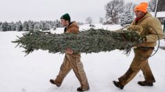 PHOTO: Howell Tree Farm employees Avery Langholz, left, and Chris Allen carry a Christmas tree to load onto a customers car on Nov. 26, 2014, in Cumming, Iowa.