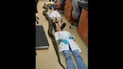 PHOTO: University of Florida staff members lie next to a dead 18-foot, 8-inch Burmese python on the campus in Gainesville, Fla. on May 15, 2013.