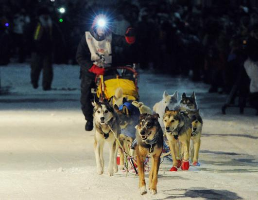 Iditarod Dog Sled Race 2013