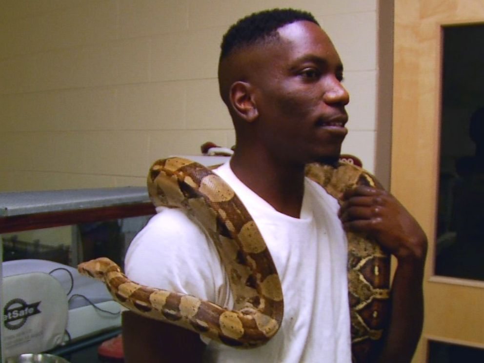 5-Foot Boa Constrictor Found in Hotel Bed