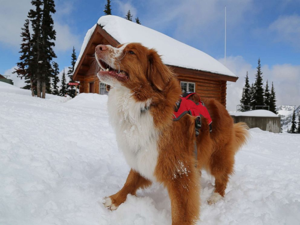 Avalanche Search and Rescue Dogs - Home | Facebook