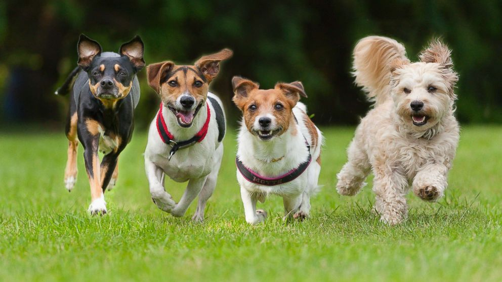 Man's best friend: Owning a dog linked to lower risk of death, study says
