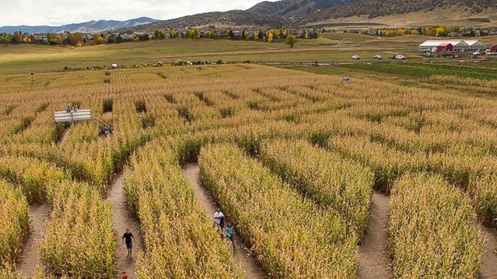 Masked Man Attacks Woman Inside Denver Corn Maze Long Room