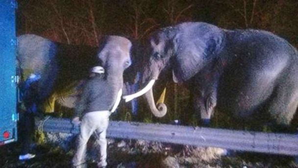 http://a.abcnews.com/images/US/elephants-on-highway-ht-thg-171120_16x9_608.jpg