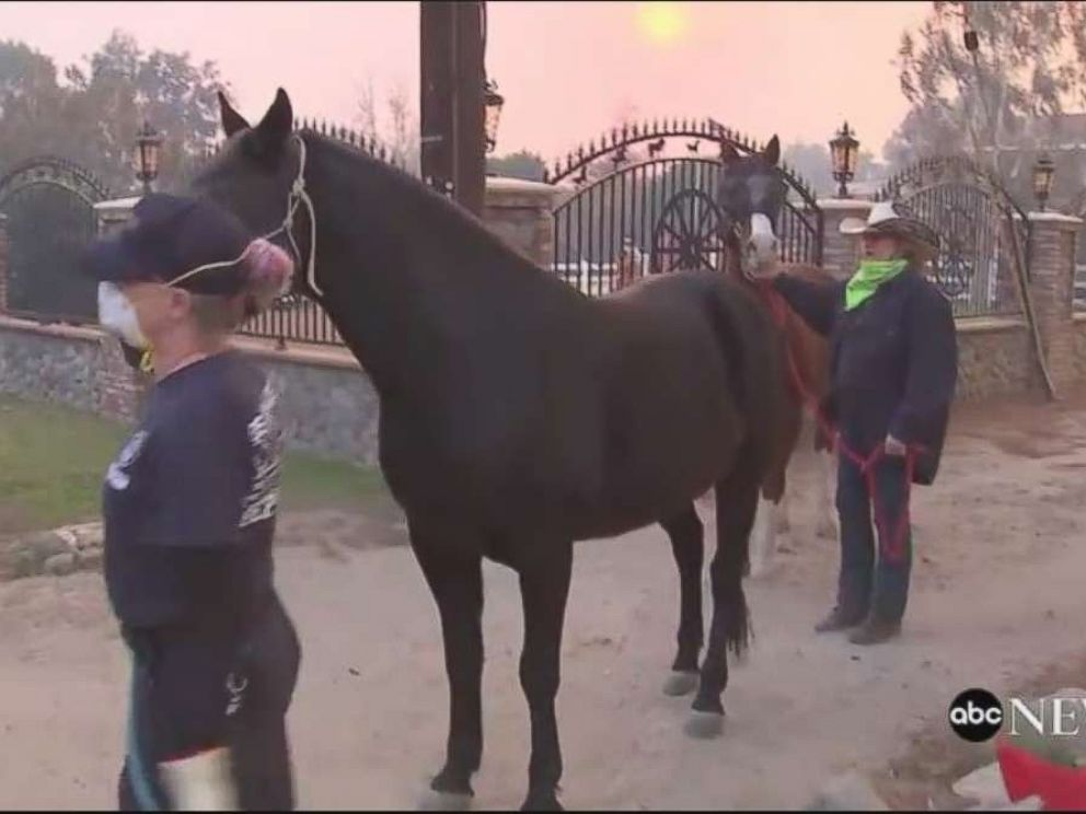 PHOTO: Horses are evacuated from a ranch in Shadow Hills, Calif. as the Creek Fire intensifies on Dec. 5, 2017.