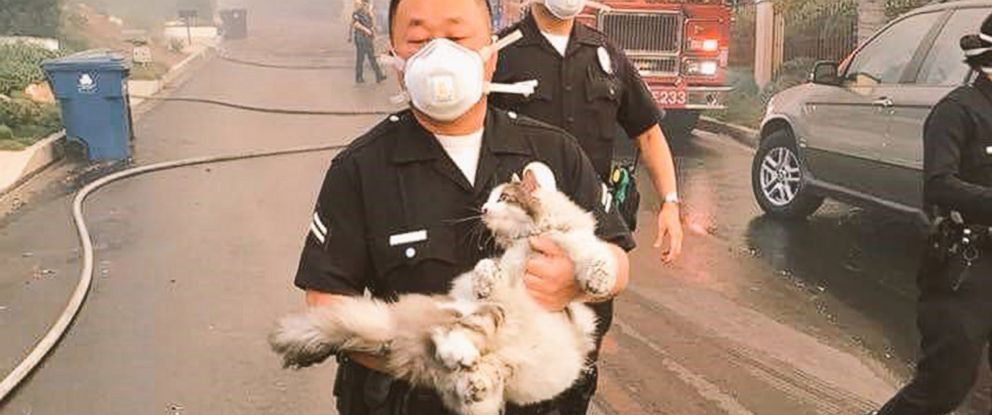 PHOTO: A policeman carries a rescued cat away from the wildfires burning in southern California.