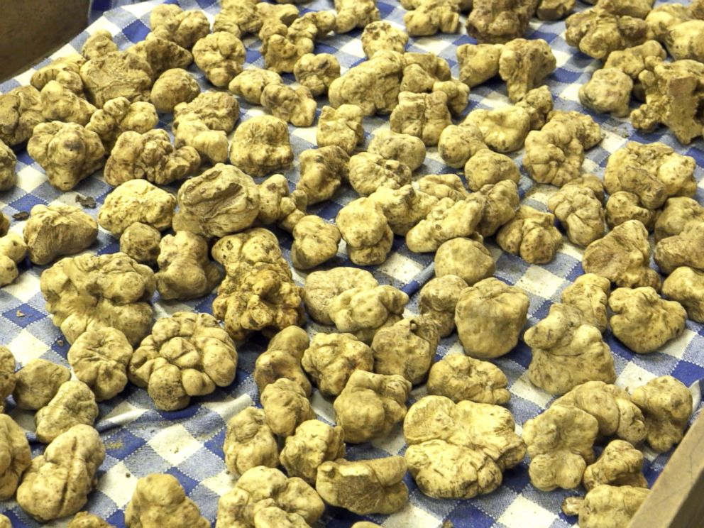 PHOTO: A collection of expensive, Italian white truffles before they are sold at Urbani Tartufi, the company that is said to control 70 percent of the global truffle trade.