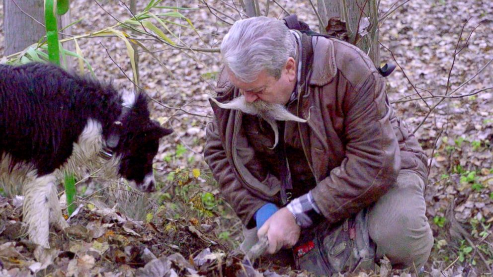 PHOTO: Igor Bianco has over 40 years of experience hunting for truffles in Alba, Italy, one of the most well-known regions where the white truffle can be found.