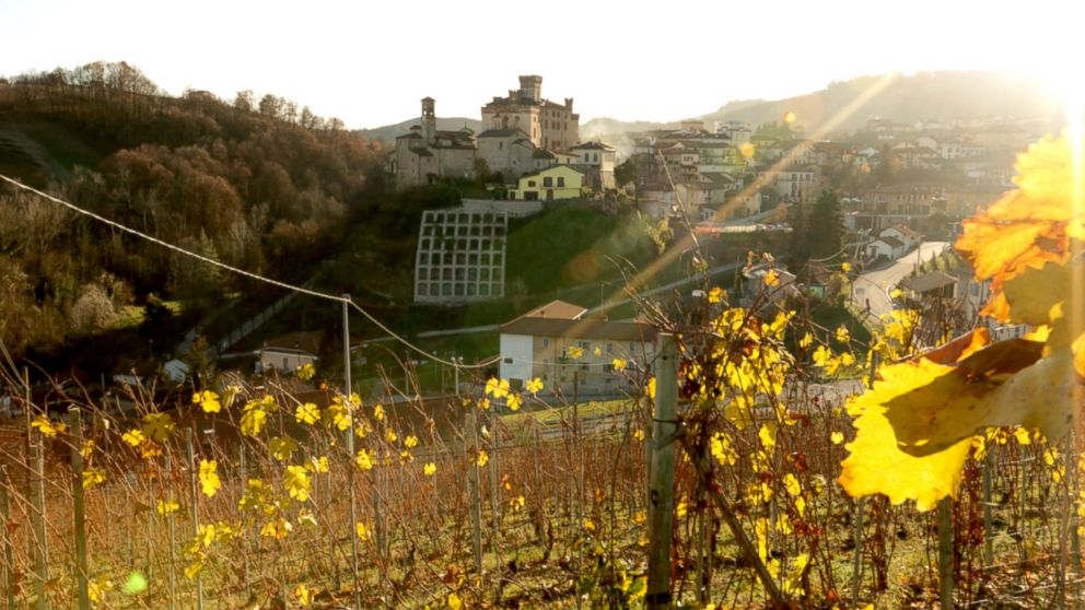 PHOTO: The Italian countryside in Barolo, Italy was once covered in forests, but is now home to high value crops like wine grapes and hazelnuts.