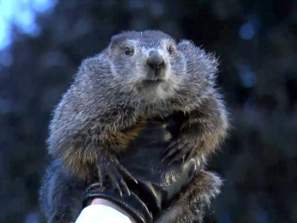 PHOTO: Punxsutawney Phil, the prognosticating groundhog, saw his shadow during the celebration of Groundhog Day on Gobblers Knob in Punxsutawney, Penn., Feb. 2, 2018.