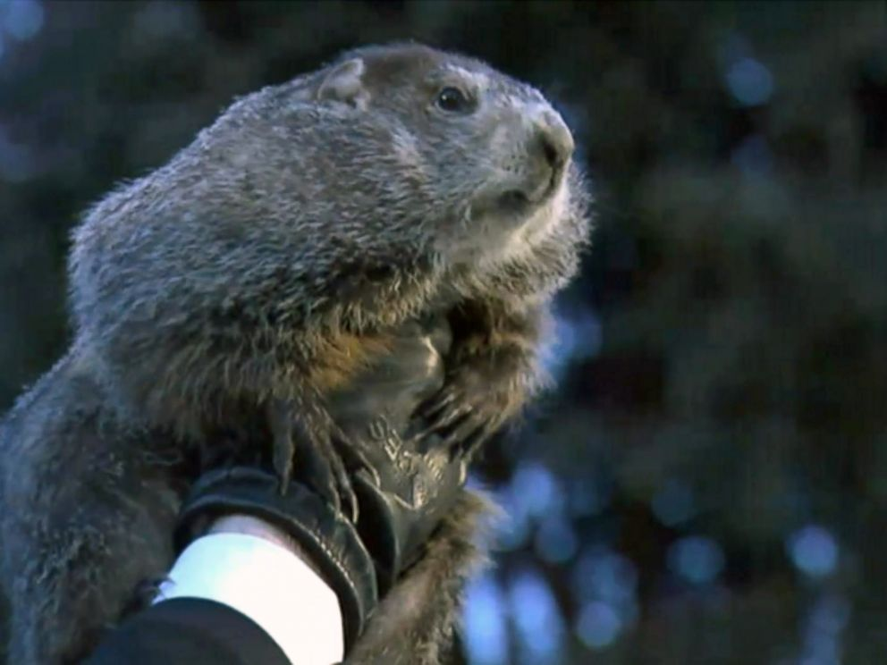 PHOTO: Punxsutawney Phil is held up by his handler for the crowd to see during the ceremonies for Groundhog day on Feb. 2, 2018, in Punxsutawney, Penn.
