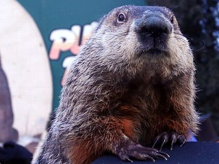 Punxsutawney Phil Indicted Over Cold