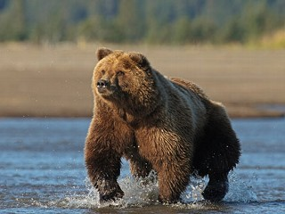 Grizzly Bear Mauls Calif. Man to Death