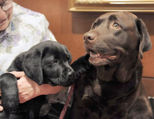 The American Kennel Club announced the top dog breeds in the U.S.