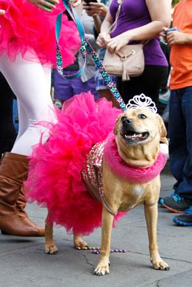 Mardi Gras Dog Parade