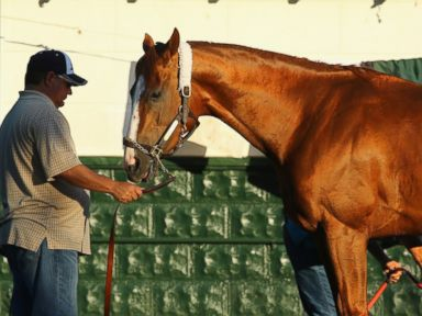 California Chrome Signs Deal With Skechers