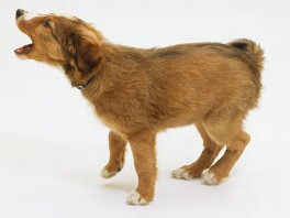 Missouri Dog Barking Laws