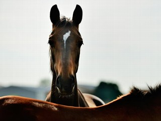 Save the Horses! Congress Weighs In