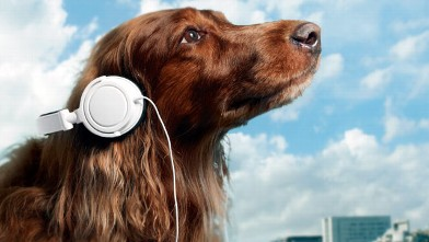 PHOTO: Scientists suggest that animals are akin to something called species specific music, music with pitches, tempos and tones that are familiar to their species.