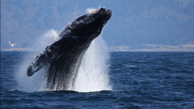 Calif man rescued after whale hits boat off Mexico