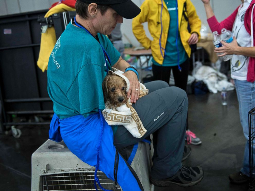 PHOTO: A vet holds a dog at a shelter in the George R. Brown