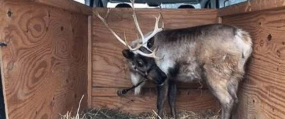 Indiana State Police pulled over the driver of a van only to find a reindeer in the back.