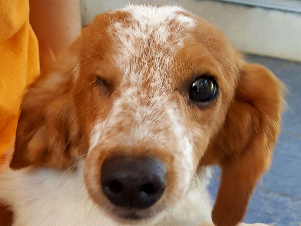 Alaqua Animal Refuge Dogs For Adoption