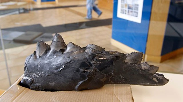 PHOTO Jay Wright, a 25-year-old miner for Webster County Coal, recently discovered a 300-million-year-old shark fossil 700 feet below the earths surface
