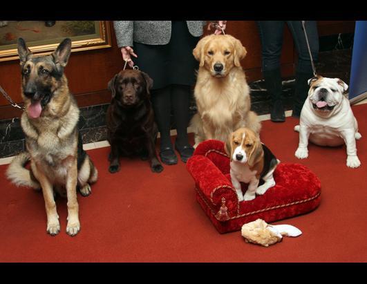 American Kennel Club Breeds