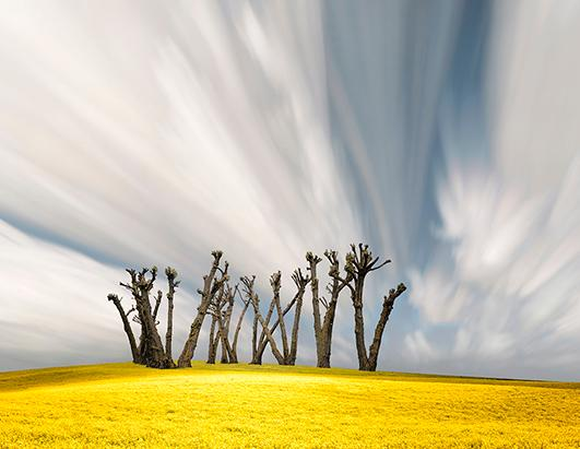 Dramatic Art of Farmlands