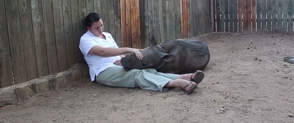 PHOTO: An orphaned baby rhino named Gertjie snuggles up to a staffer at the Hoedspruit Endangered Species Centre in South Africa in this image made from a YouTube video posted by Pick n Pay on May 28, 2014.