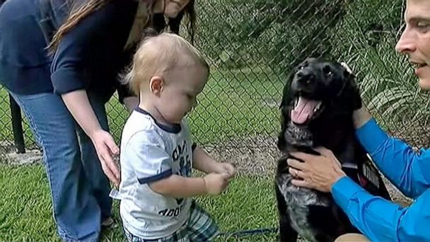 ht baby sitter abuse dog ll 130912 16x9 608 Hero Dog Saves Boy from Abusive Babysitter