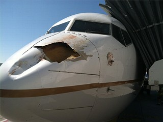 Bird-Strike Leaves Gaping Hole in Plane