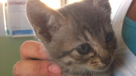 ht cat 2 mi 130617 wblog Kitten Survives 1,000 Mile Trip in Engine of Honda