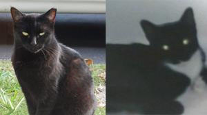 Cat Serial Killer