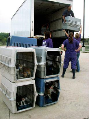 Animals Escape Hurricane Isaac's Path