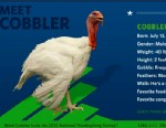 PHOTO Cobbler is one of the turkeys that could be pardoned as the National Thanksgiving Turkey.