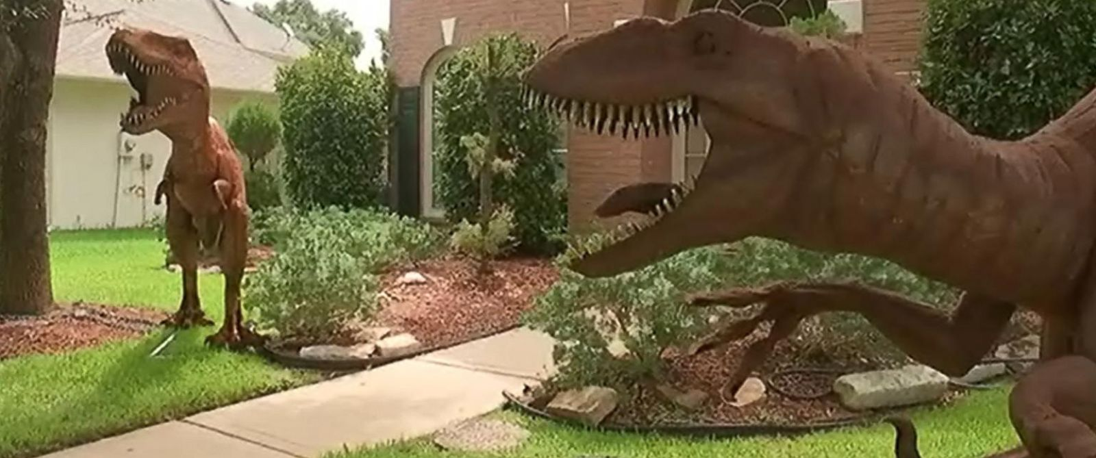 Dinosaur Lawn Decorations Dinosaurs On Couples Front Lawn Yard Turns Heads In Planned