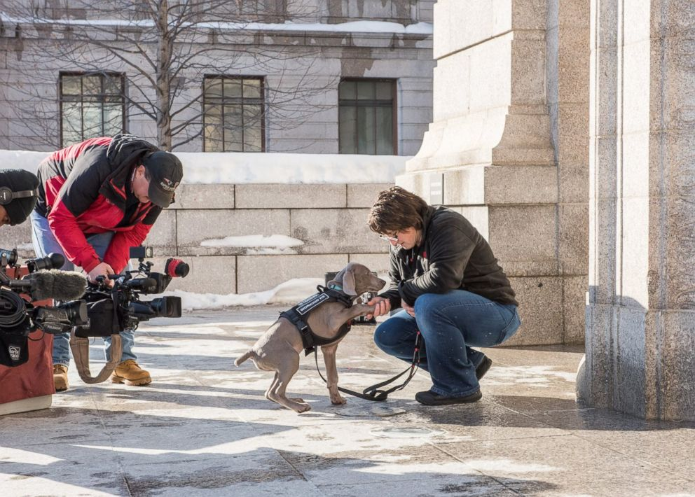 PHOTO: Bostons Museum of Fine Arts introduced its newest employee, Riley, a bug-sniffing puppy on Jan. 10, 2018.