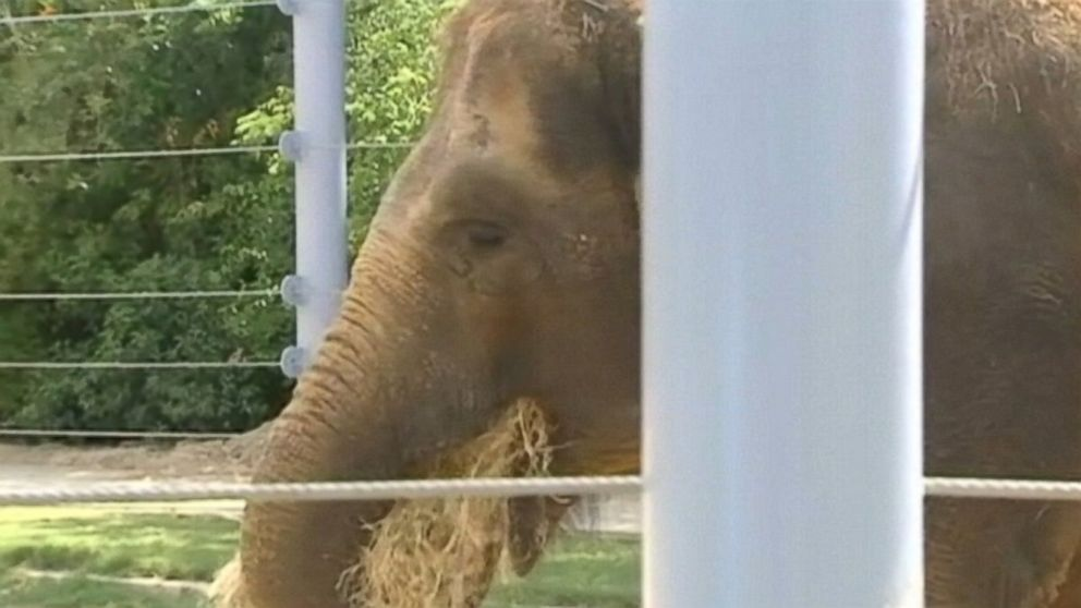 PHOTO: Tess, a pregnant elephant, needs to lose 500 pounds before her 2015 due date.
