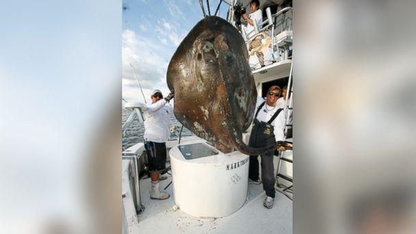 ht fisherman kb 131125 16x9 608 Fisherman Hooks Monster Skate Off Miami Beach