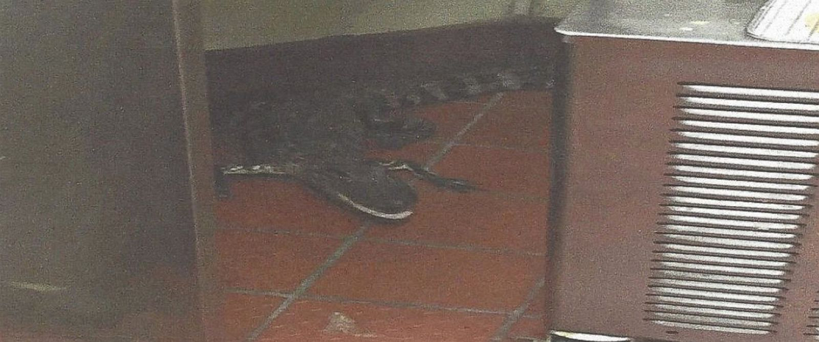 PHOTO:An alligator ended up in the kitchen of a Wendys restaurant on Oct. 12, 2015, after allegedly being thrown into the drive-thru window, according to a Florida Fish and Wildlife Conservation Commission incident report.