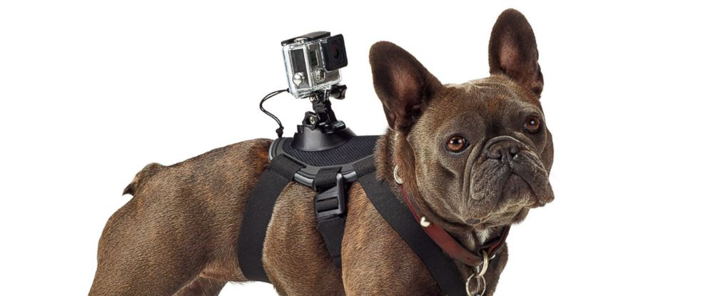 PHOTO: GoPro has announced the Fetch Dog Harness which will allow owners to attach the popular video cameras to their family pets.